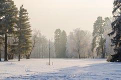 Bäume bedeckt mit Frost in einem schneebedeckten Wald Lizenzfreie Stockbilder