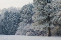 Bäume bedeckt mit Frost in einem schneebedeckten Wald Lizenzfreies Stockfoto