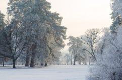 Bäume bedeckt mit Frost in einem schneebedeckten Wald Lizenzfreie Stockfotos