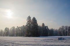 Bäume bedeckt mit Frost in einem schneebedeckten Wald Stockfotografie