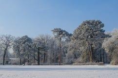 Bäume bedeckt mit Frost in einem schneebedeckten Wald Stockbild