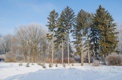 Bäume bedeckt mit Frost in einem schneebedeckten Wald Stockfoto