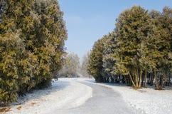 Bäume bedeckt mit Frost in einem schneebedeckten Wald Stockfotos