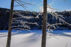 Bäume bedeckt mit Frost im Winter, Adirondack Forest Preserve, Stockbild