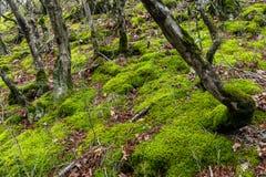 Bäume bedeckt mit grünem Moos Stockbild