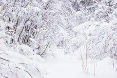 Bäume bedeckt mit Reif und Schnee im Winter Lizenzfreie Stockbilder