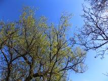 Bäume bei Crookham, Northumberland, England Stockfoto