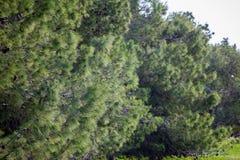 Bäume bei Ein Afec Stockbilder