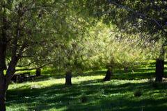 Bäume bei Ein Afec Lizenzfreies Stockfoto