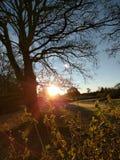 Bäume bei Sonnenaufgang Stockfoto