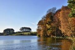 Bäume bei Talkin Tarn, an einem Herbsttag. Stockfotografie