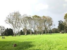 Bäume beim Treffen stockbilder