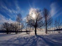 Bäume beleuchtet mit Solarhintergrundbeleuchtung Lizenzfreies Stockbild