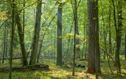 Bäume belichtet durch Leuchte Stockfotos