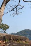 Bäume, Berge Stockbilder