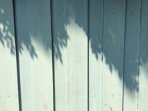 Bäume beschatten auf der blauen Wand Stockfotos