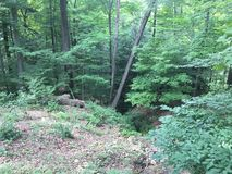 Bäume, Blätter, Gras und Büsche Stockfoto