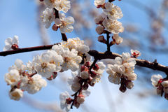 Bäume blühen Stockbild