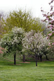 Bäume blüht im Frühjahr Lizenzfreie Stockfotos