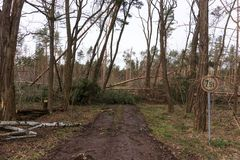Bäume blockieren den Waldweg nach dem Sturm stockfoto
