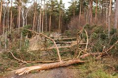 Bäume blockieren den Waldweg nach dem Sturm stockbild