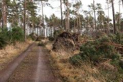 Bäume blockieren den Waldweg nach dem Sturm lizenzfreie stockfotografie