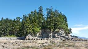 Bäume an botanischem lizenzfreie stockfotos