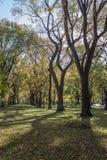 Bäume in Central Park Stockfotografie