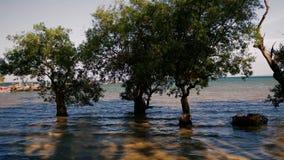 Bäume in das Meerwasser, wenn die Gezeiten hoch sind stock video footage