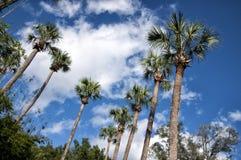 Bäume Deland Floria Palm mit einem blauen Himmel und Wolken Lizenzfreies Stockbild