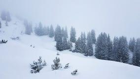 Bäume in den österreichischen Alpen Lizenzfreie Stockfotos