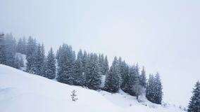 Bäume in den österreichischen Alpen Stockbild