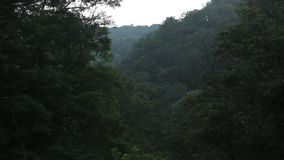Bäume in den Bergen beeinflussen in den wilden Wald des Winds stock footage
