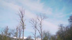 Bäume in den Bergen im Fall stock footage