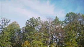 Bäume in den Bergen im Fall stock video