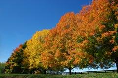 Bäume in den Fall-Farben Lizenzfreie Stockfotografie
