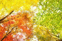 Bäume in den Fallfarben stockbilder