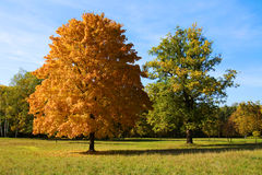 Bäume in den Herbstfarben Lizenzfreies Stockfoto