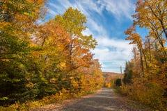 Bäume in den Herbstfarben Stockfotografie