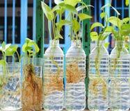 Bäume in den Plastikwasserflaschen Stockfoto