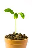 Bäume in den Potenziometern lizenzfreie stockfotos
