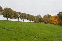 Bäume in den Reihen Stockfoto