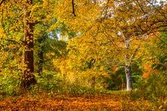 Bäume in den schönen warmen Farben Lizenzfreies Stockfoto