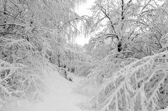 Bäume in den Schneefällen Lizenzfreie Stockbilder