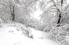 Bäume in den Schneefällen Stockfotos