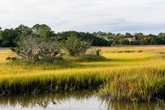 Bäume in den Sumpfgebiet-Sümpfen Stockbild