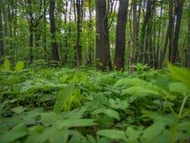Bäume in den Wald lizenzfreie stockfotos