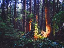 Bäume in der Ausstattung landet, Vancouver, Kanada Stockfotos