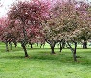 Bäume in der Blüte Stockfoto