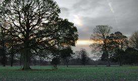 Bäume an der Dämmerung lizenzfreie stockfotos